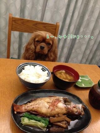 嵐丸 2013.10.8-2