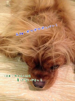 嵐丸 2013.10.14-4