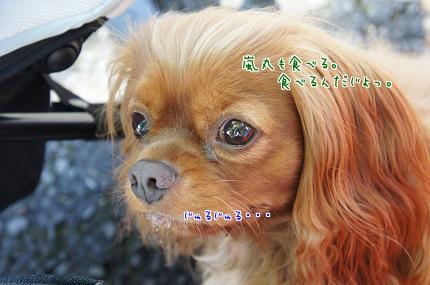 嵐丸 2013.10.17-13