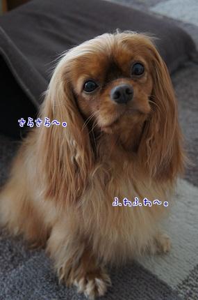 嵐丸 2013.10.17-16