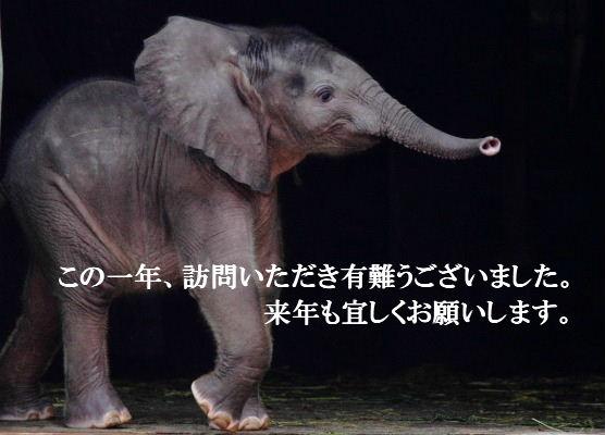 TobeZoo Toa 130802 022