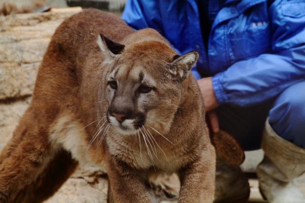 TobeZoo Puma-Inty 131228 009