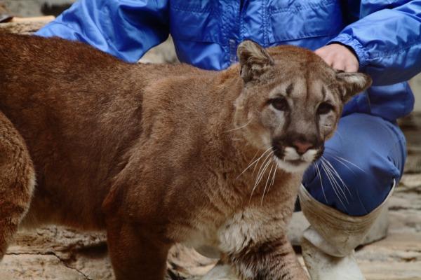 TobeZoo Puma-Inty 131228 021