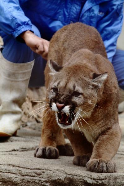 TobeZoo Puma-Inty 131228 023