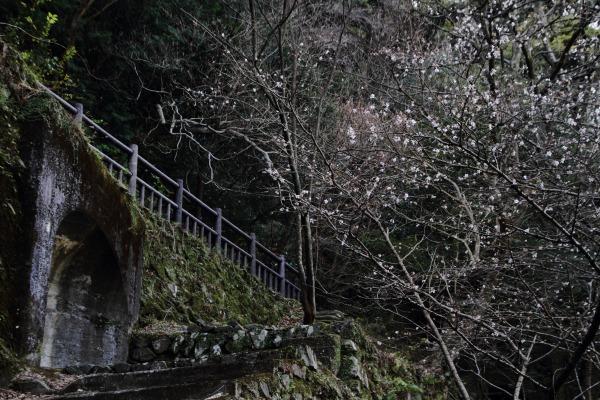 マイトピア別子・冬桜 140102 01