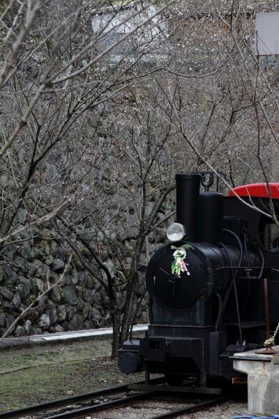 マイトピア別子・冬桜 140102 05