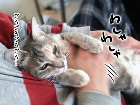 ねね2013.12.16②