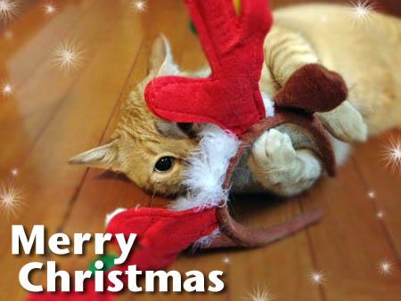 クリスマスカード(団長)