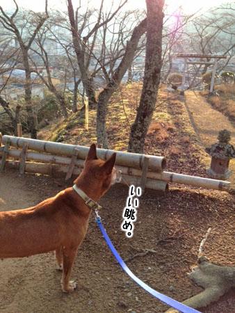 雪子2014.1.11③
