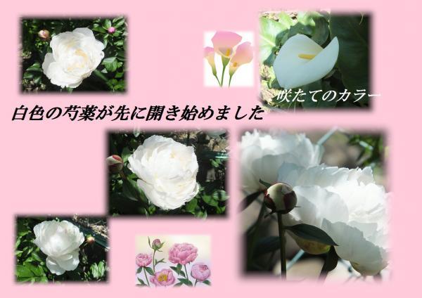 闃崎脈_convert_20130502224554