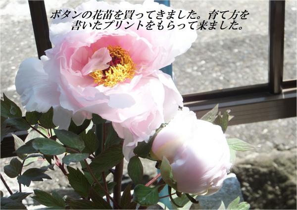 繝昴ち繝ウ_convert_20130502224513