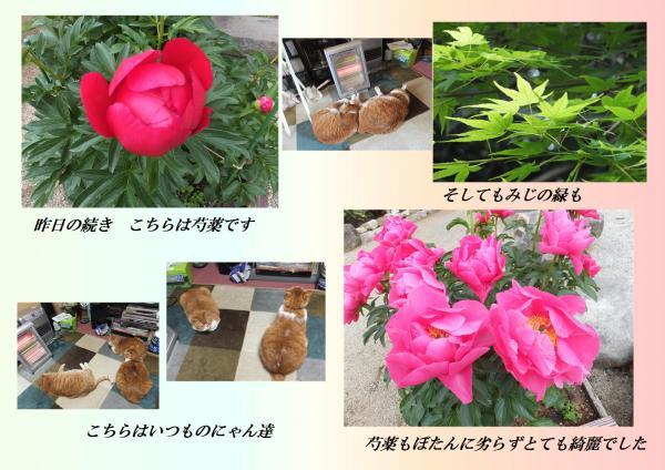 闃崎脈_convert_20130504205052
