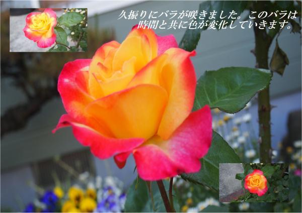 縺ー繧雲convert_20130509231813