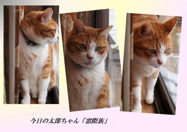 3螟ェ驛酸convert_20130514225743