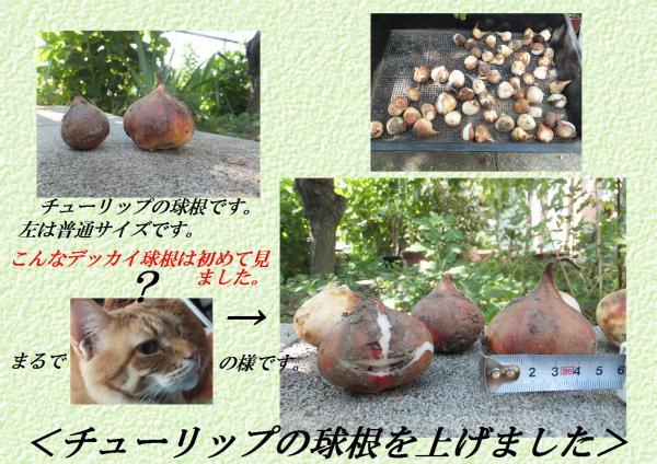 逅・ケ_convert_20130518223705