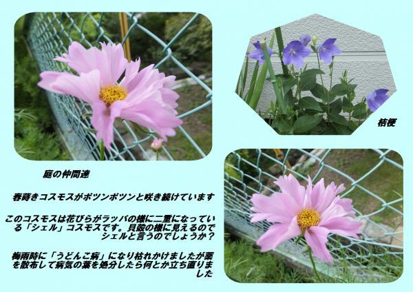 縺ッ縺ェ_convert_20130714193714
