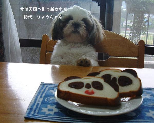 りょう君とパンダケーキ
