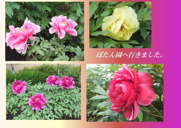 51_convert_20130503222336.jpg
