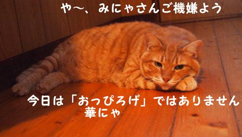 P7192284.jpg