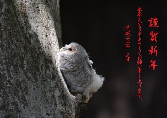 フクロウ 年賀