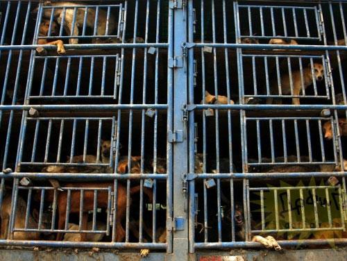 世界 「なんで犬を食べちゃダメなの?」 ←感情論抜きで論破できる?