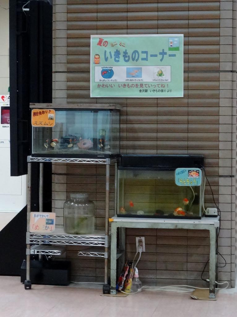 20130926ikimonokanazawast.jpg