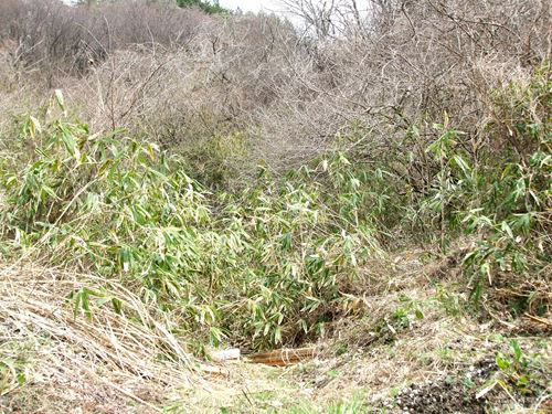 nagahara6.jpg