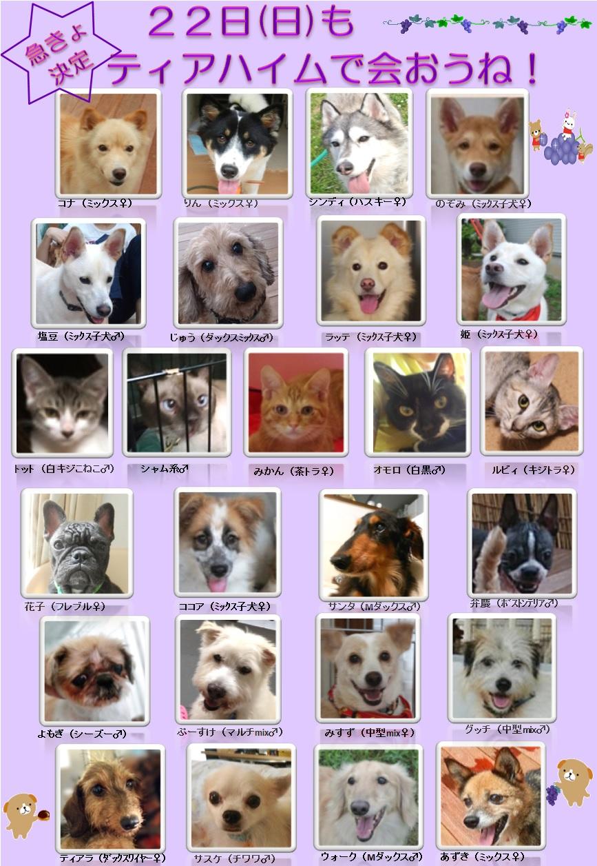 ALMA ティアハイム 9月22日 参加犬猫一覧