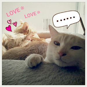 cat_lovelove.jpg