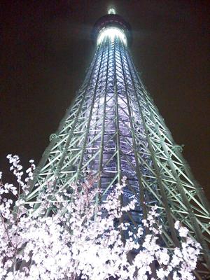st_sakura_saku.jpg
