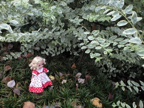 銀の葉の森