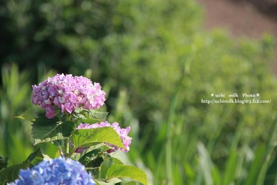 IMG201306_4813.jpg