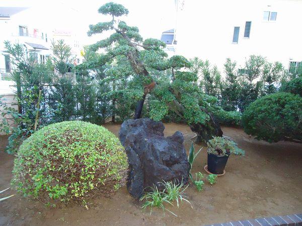 ウバメカシと庭石