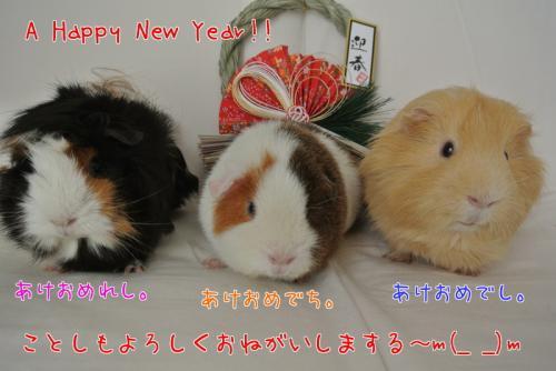 あけましておめでとうございます2013 3