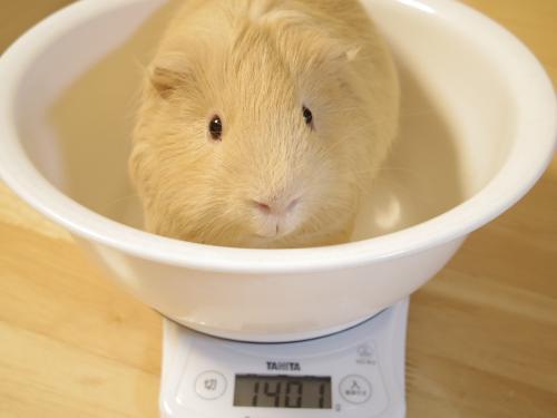 体重測定2014年1月5日2