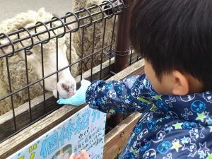 羊にごはん