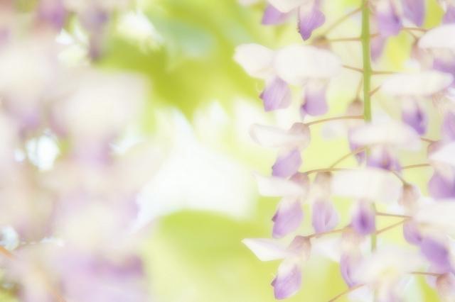 huji059.jpg