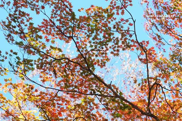 高丸山 紅葉
