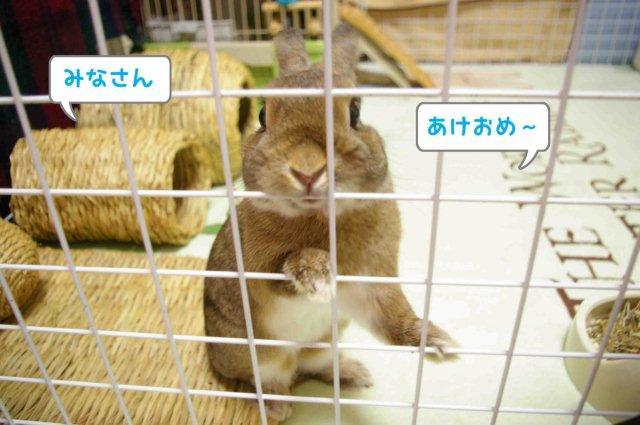 01みなさんあけおめ~
