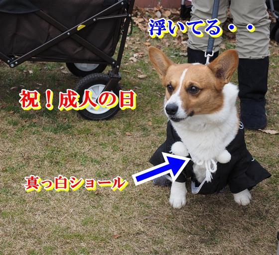驕捺コ€・・P1030257 (2)