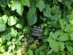 9:11 サイロの下の草の中に、小さなプレートがありました。(宝探し状態です)