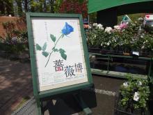13:23 薔薇博が開かれています。