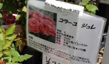 雪印種苗の売り場の表示