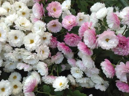 S20131212せせらぎの冬の花々
