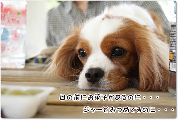 20130416_356.jpg