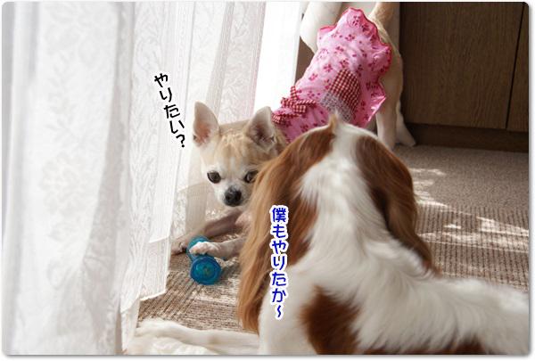 20130502_040.jpg