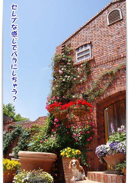 20130508_087.jpg