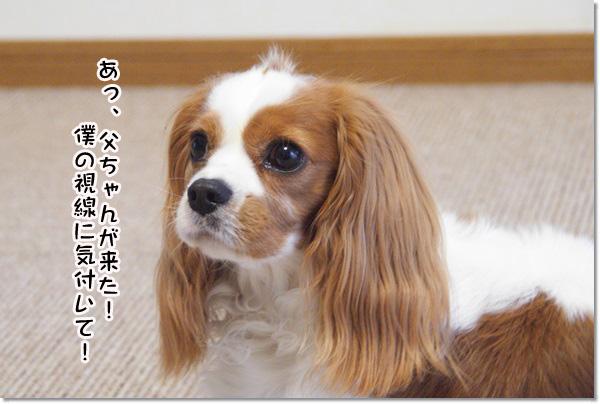 20130614_103.jpg