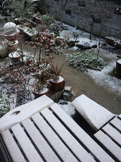 20140110_初雪1