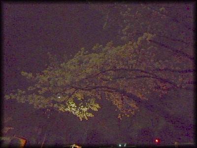 茨木の花見6
